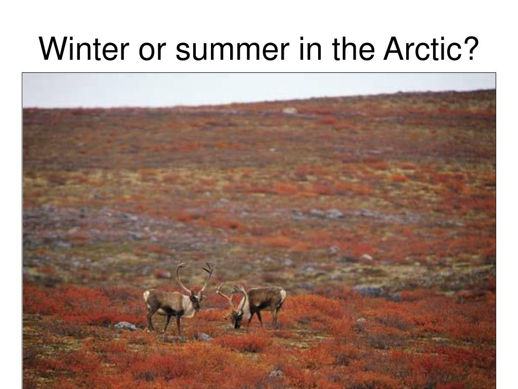 Winter or summer in the Arctic?