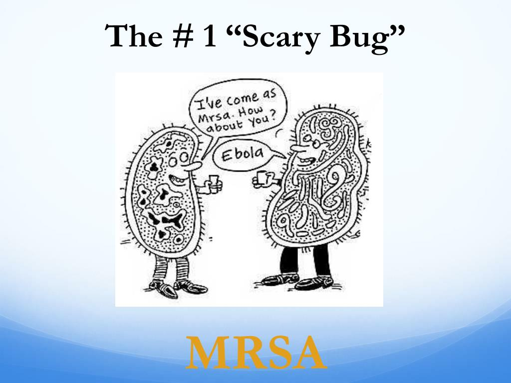 "The # 1 ""Scary Bug"""