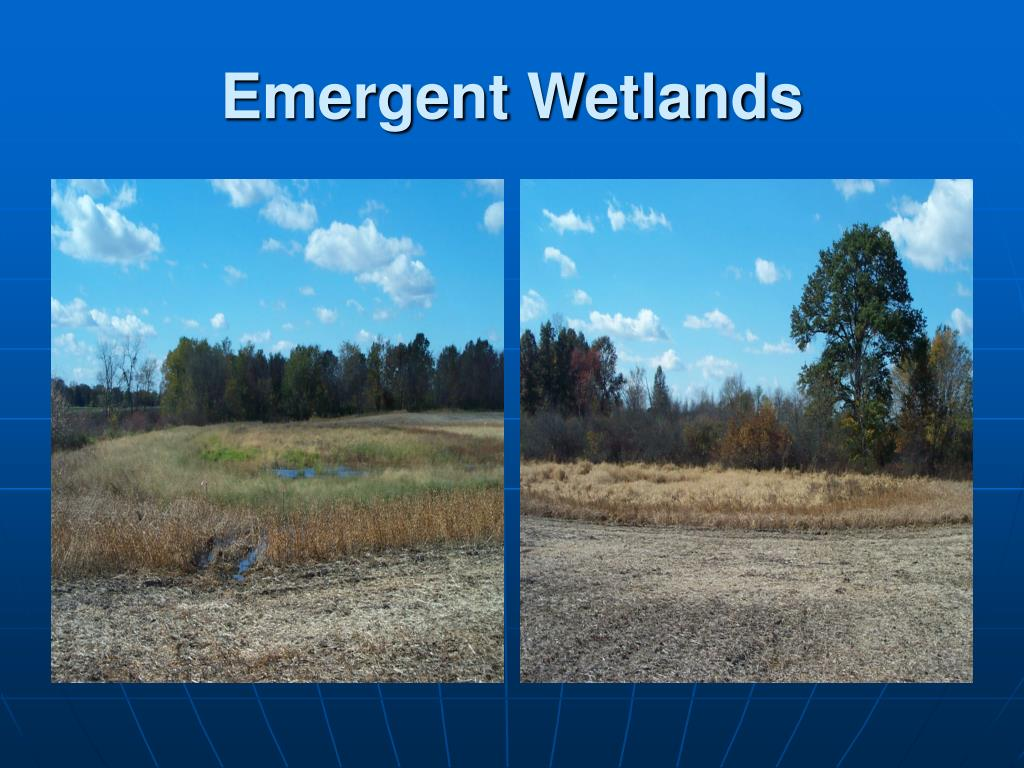 Emergent Wetlands