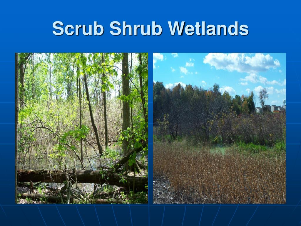 Scrub Shrub Wetlands