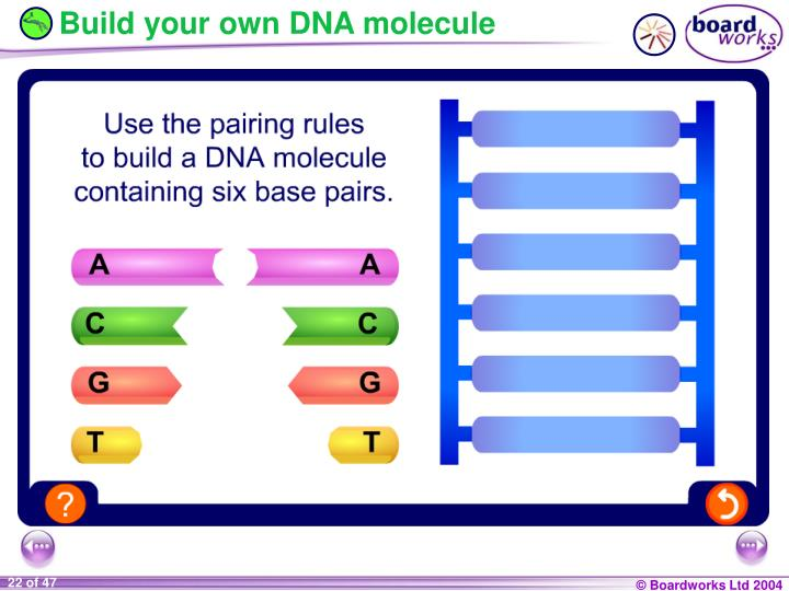 Build your own DNA molecule