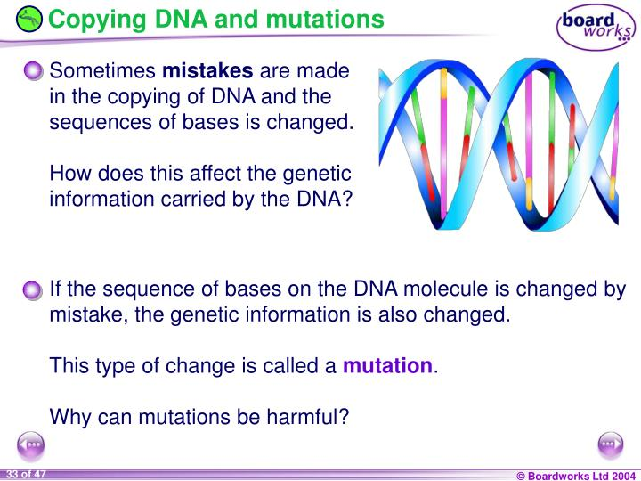 Copying DNA and mutations