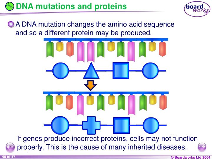 DNA mutations and proteins