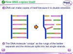 how dna copies itself