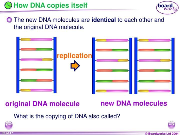 How DNA copies itself