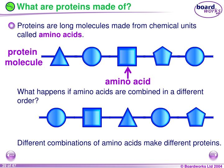 What are proteins made of?