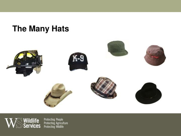The Many Hats
