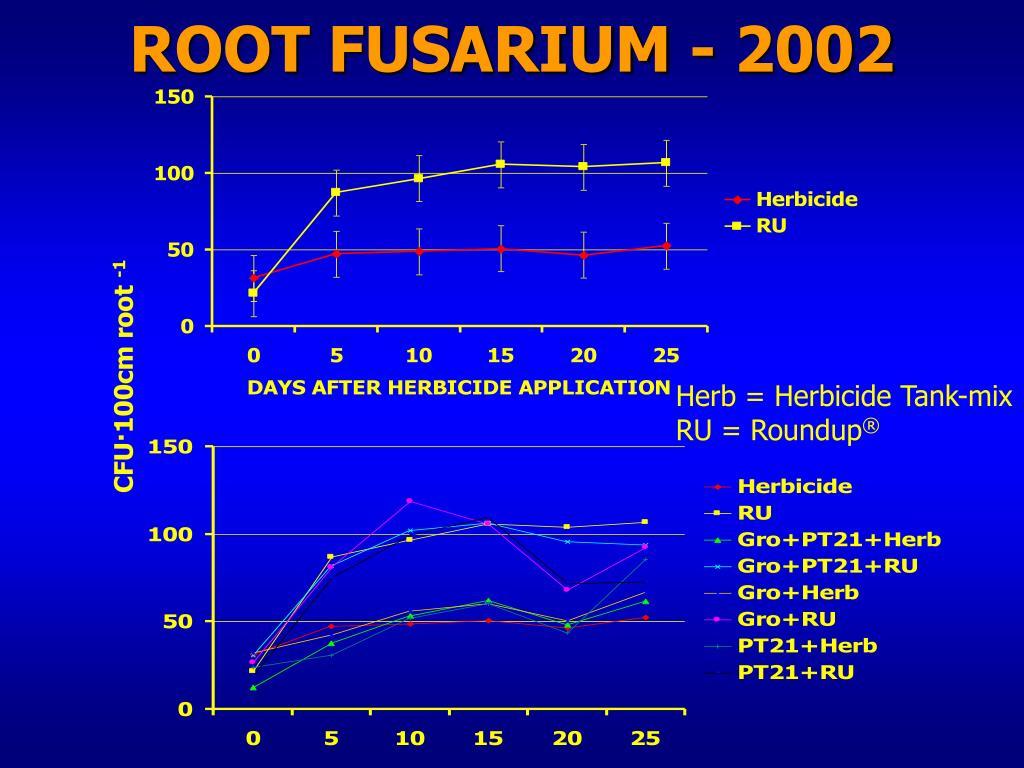 ROOT FUSARIUM - 2002
