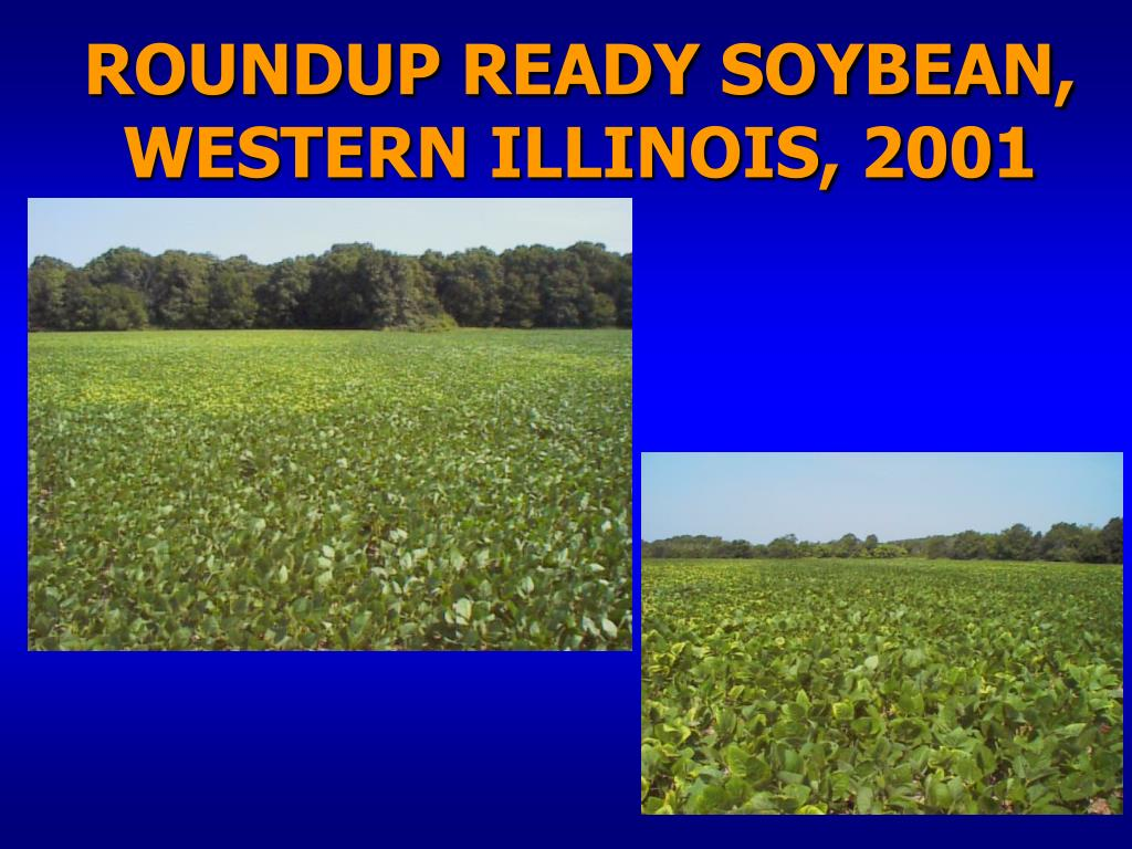 ROUNDUP READY SOYBEAN, WESTERN ILLINOIS, 2001