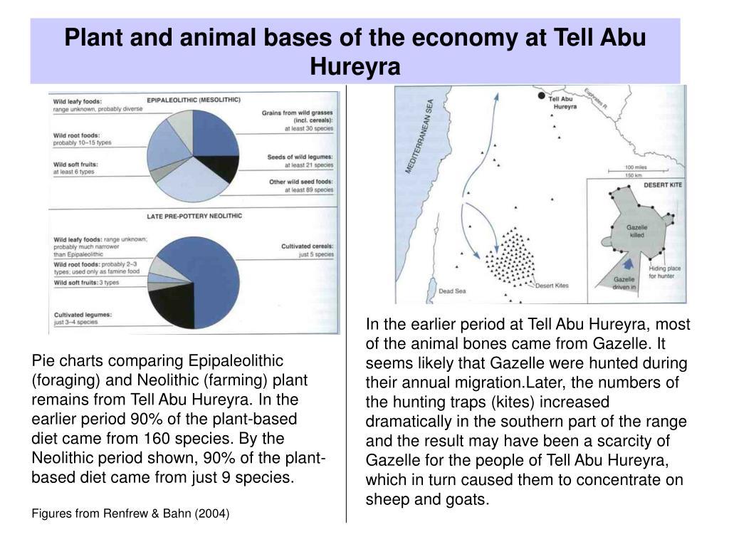 Plant and animal bases of the economy at Tell Abu Hureyra