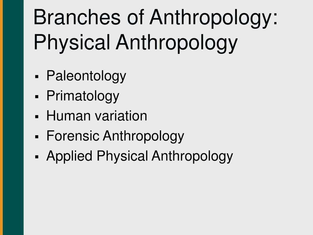 Branches of Anthropology: Physical Anthropology