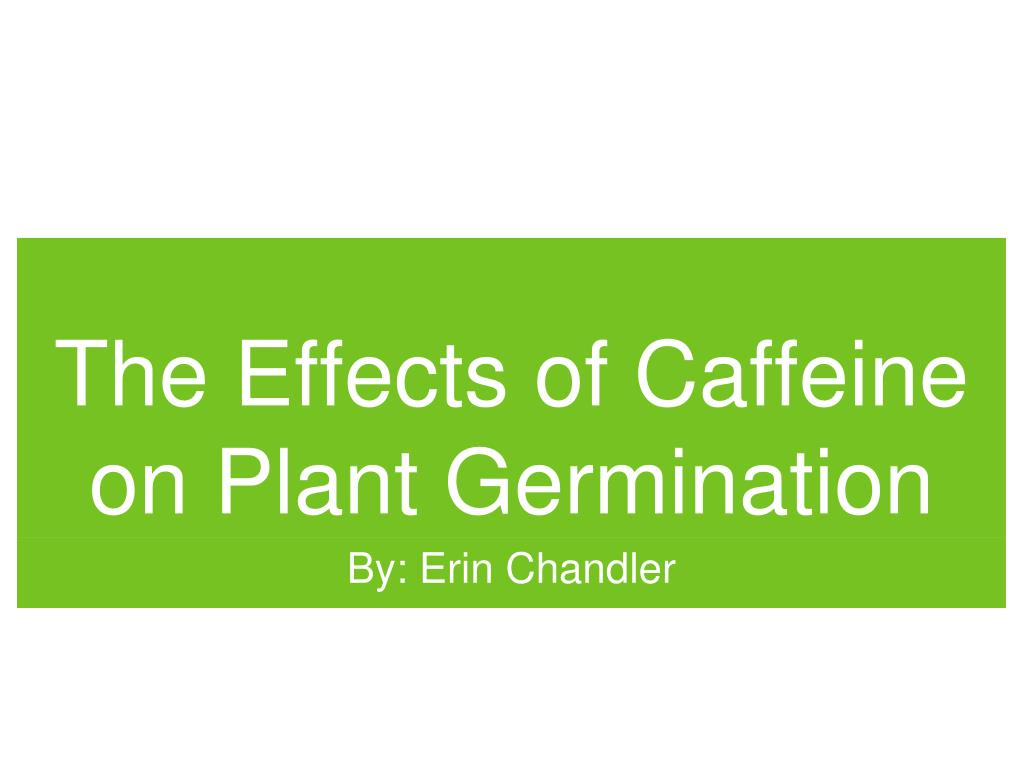 the effects of caffeine on the Caffeine is found in coffee, tea, cola drinks and cocoa caffeine is a drug that is  very similar to theophylline theophylline is a bronchodilator.