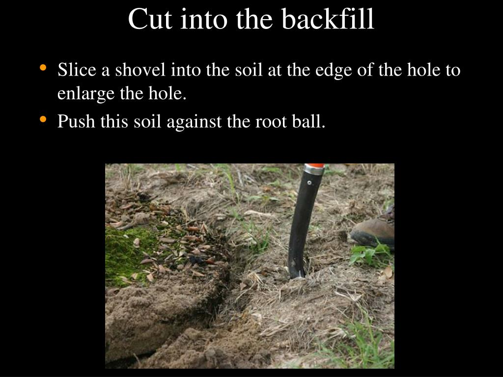 Cut into the backfill