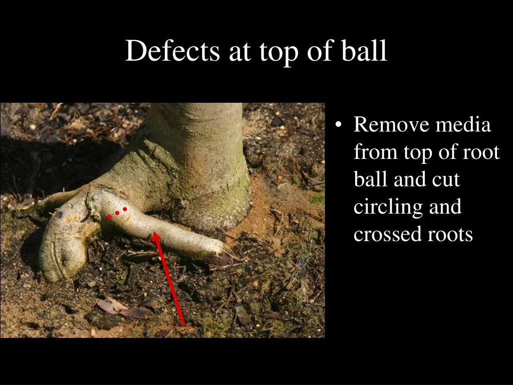Defects at top of ball