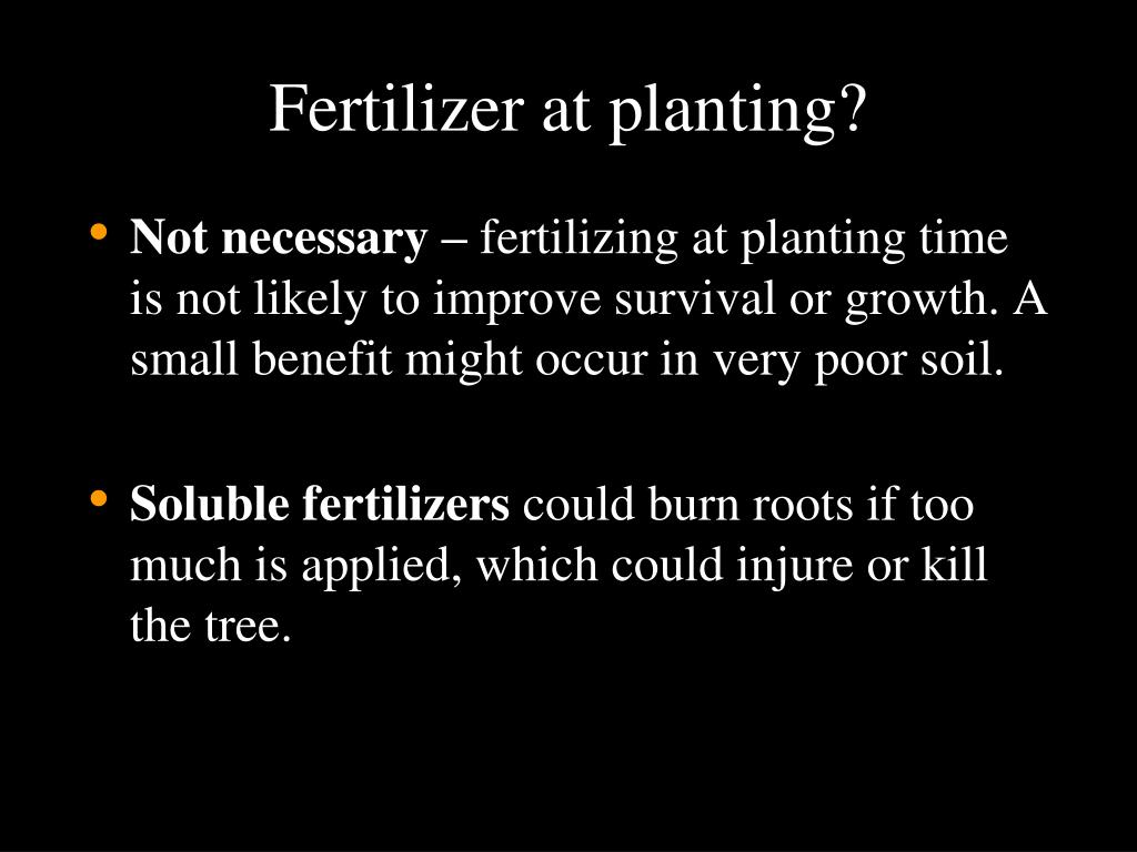 Fertilizer at planting?