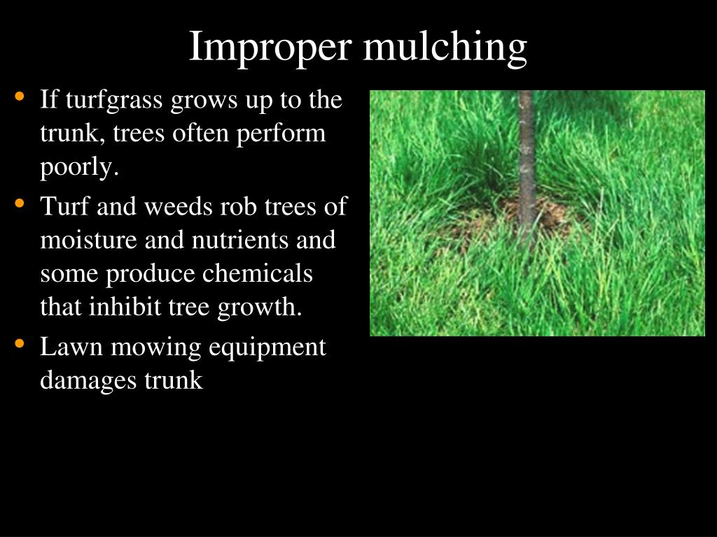 Improper mulching