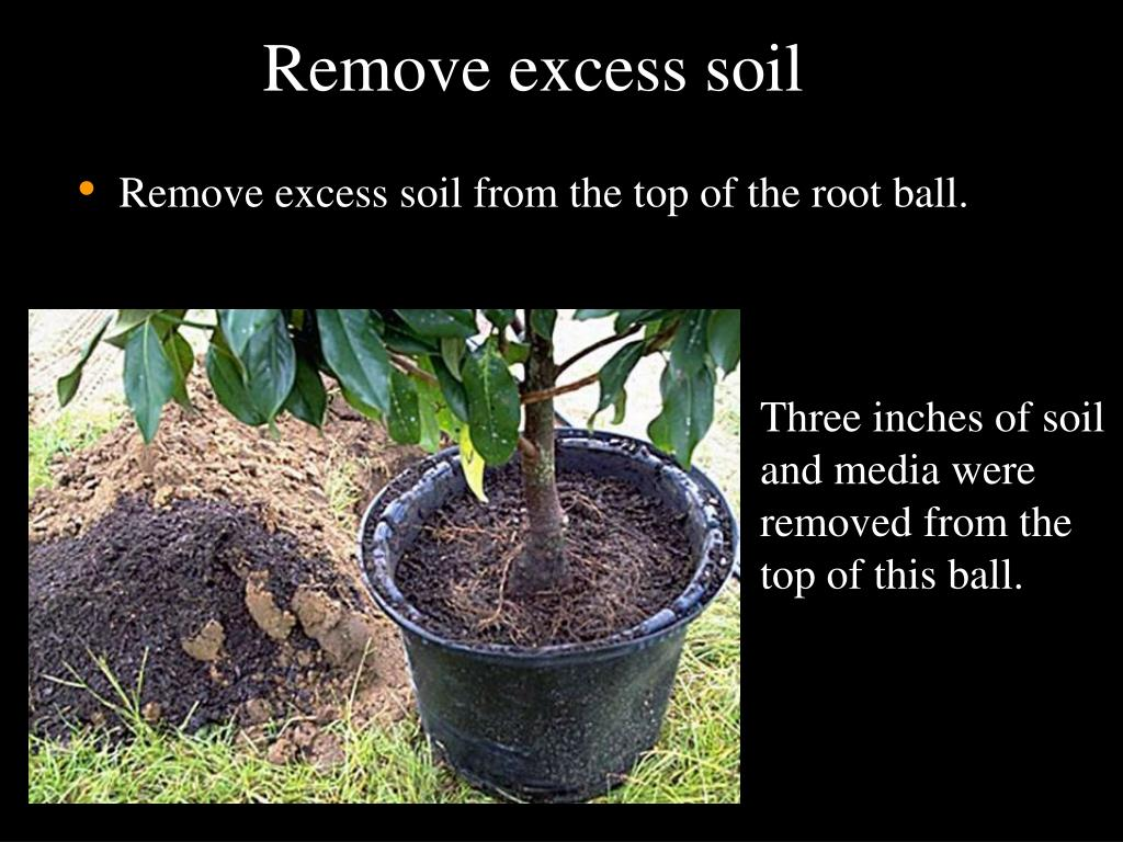 Remove excess soil