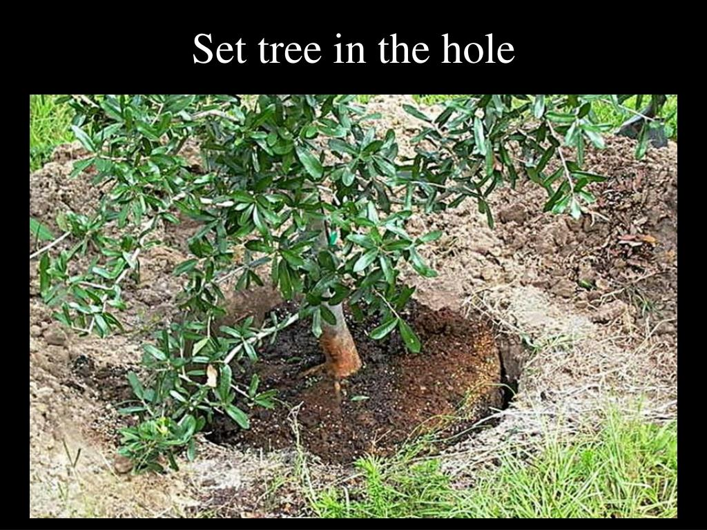 Set tree in the hole