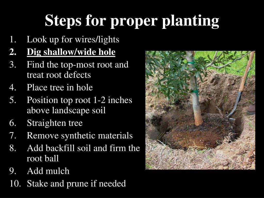 Steps for proper planting