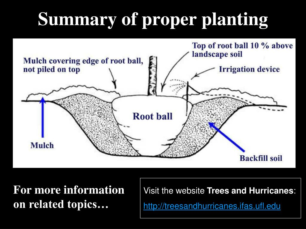 Summary of proper planting