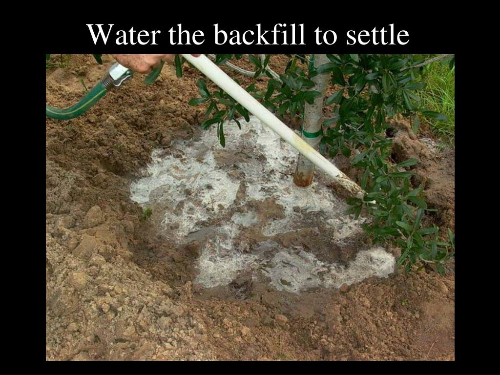 Water the backfill to settle