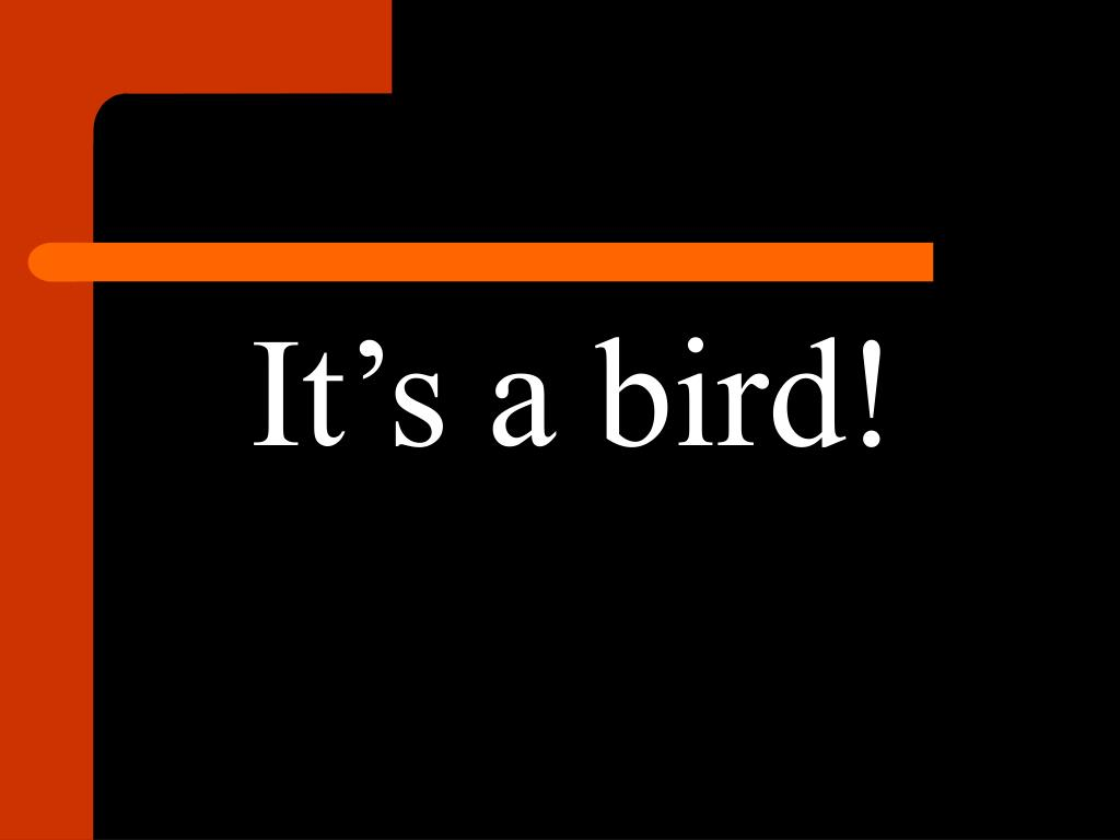 It's a bird!