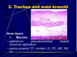 2 trachea and main bronchi