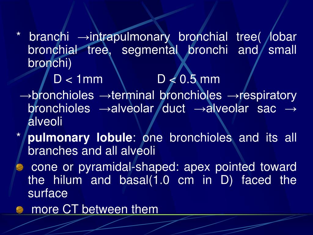 * branchi →intrapulmonary bronchial tree( lobar bronchial tree, segmental bronchi and small bronchi)