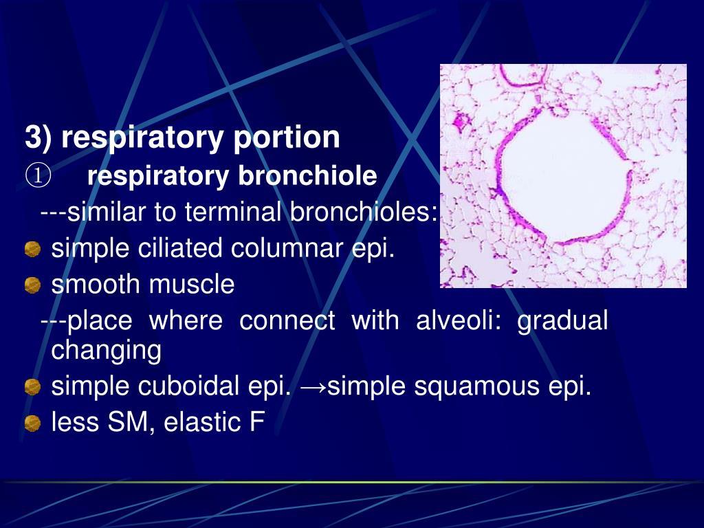 3) respiratory portion