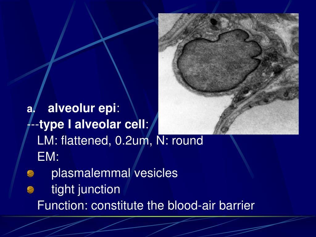 alveolur epi
