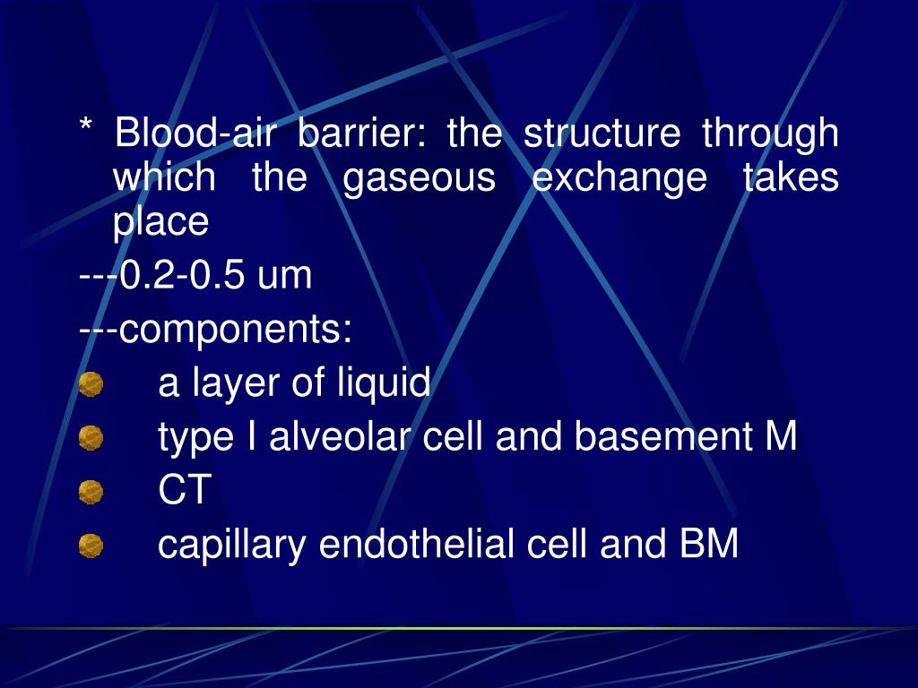 * Blood-air barrier: the structure through which the gaseous exchange takes place