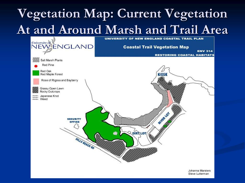 Vegetation Map: Current Vegetation At and Around Marsh and Trail Area