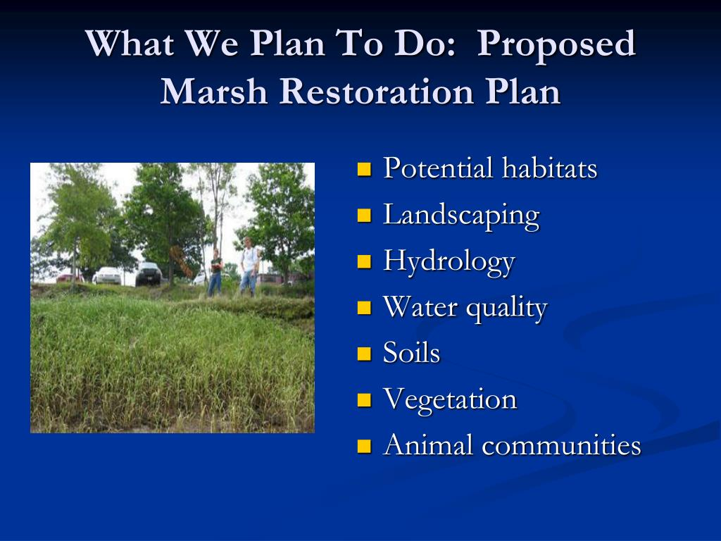 What We Plan To Do:  Proposed Marsh Restoration Plan