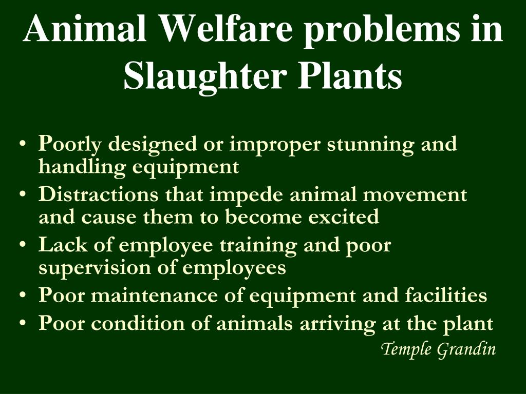 Animal Welfare problems in Slaughter Plants