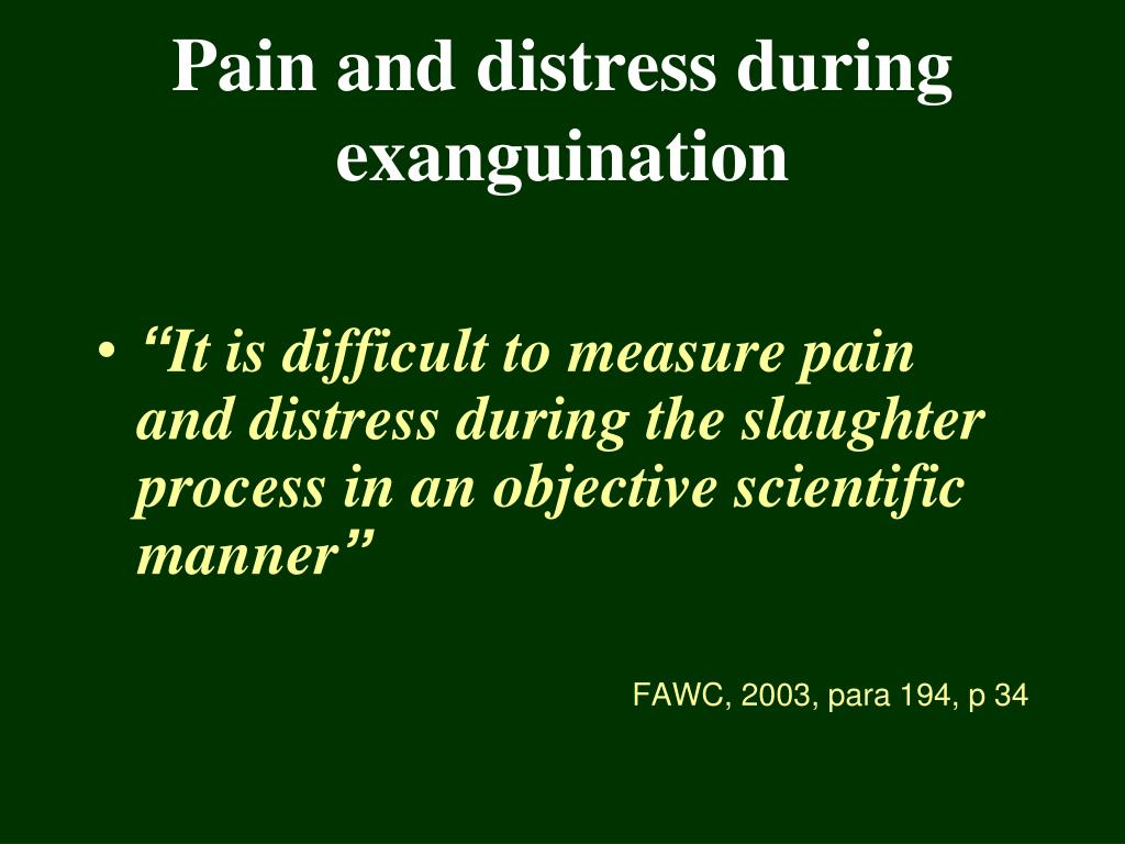 Pain and distress during exanguination