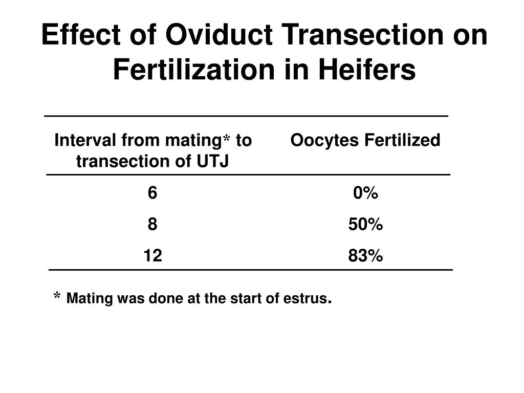 Effect of Oviduct Transection on Fertilization in Heifers
