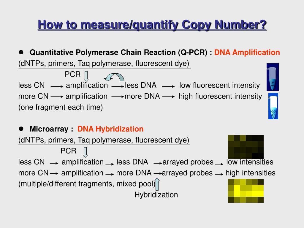 Quantitative Polymerase Chain Reaction (Q-PCR) :
