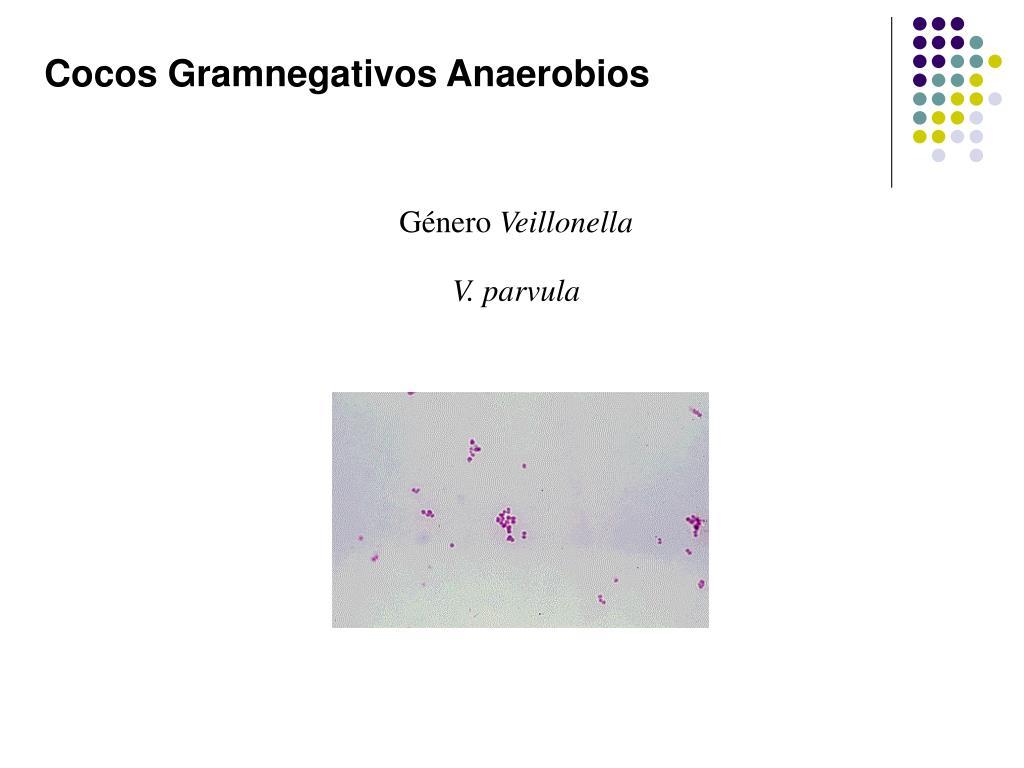 Cocos Gramnegativos Anaerobios
