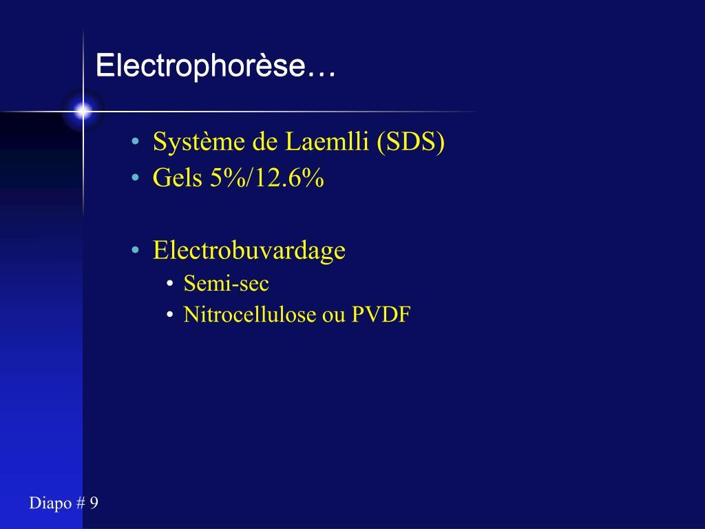 Electrophorèse…