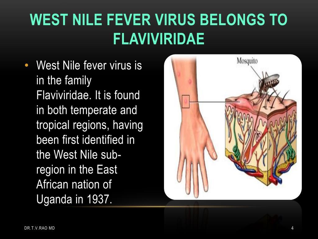 West nile fever virus belongs to Flaviviridae