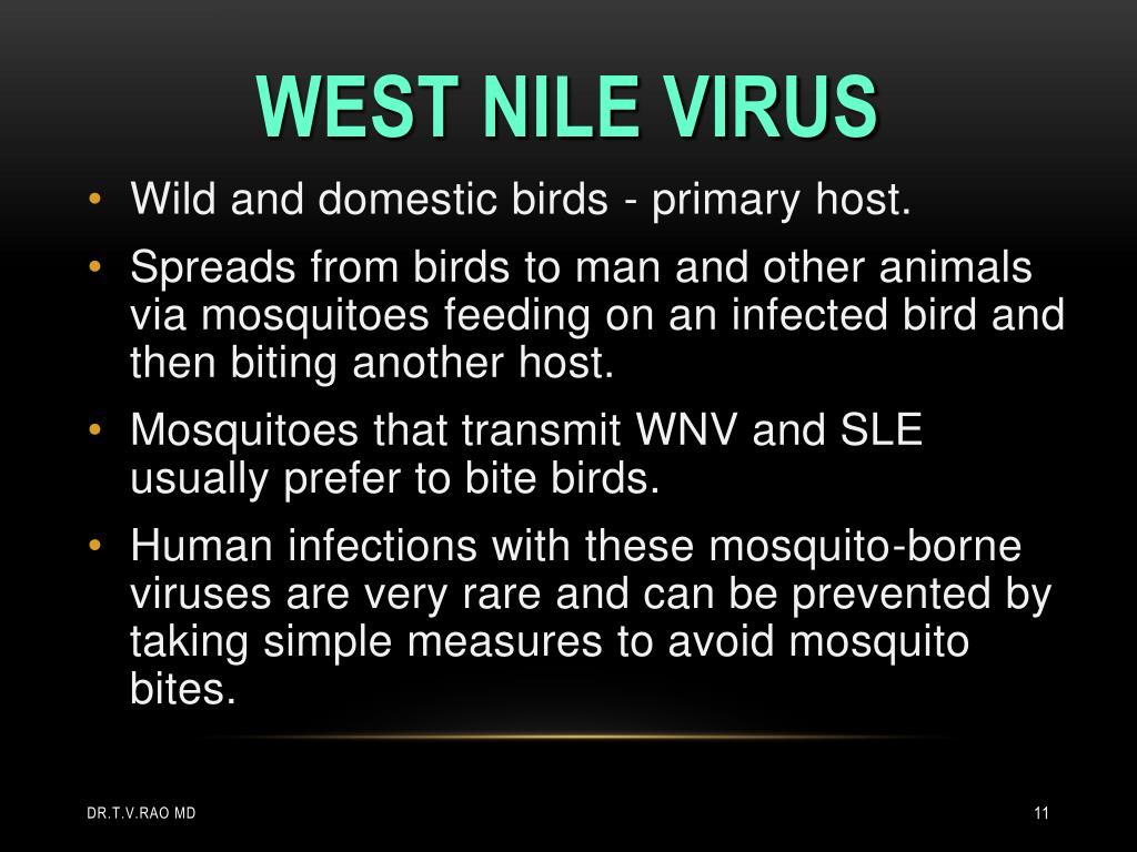 Wild and domestic birds - primary host.