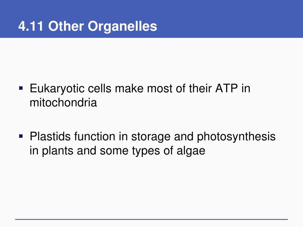 4.11 Other Organelles