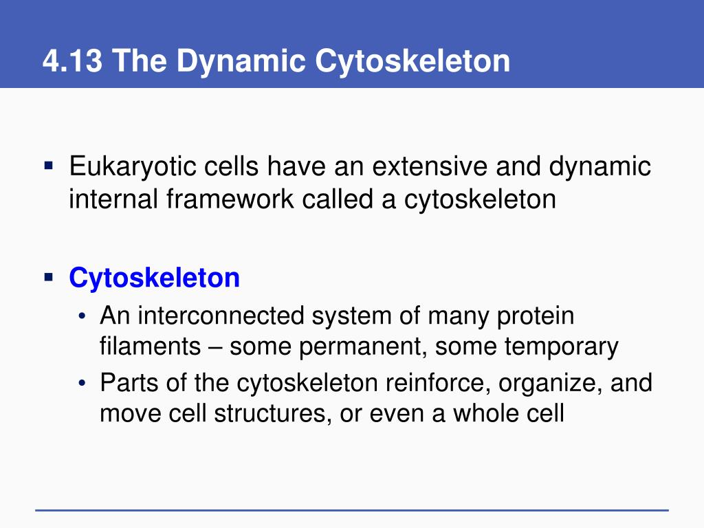 4.13 The Dynamic Cytoskeleton