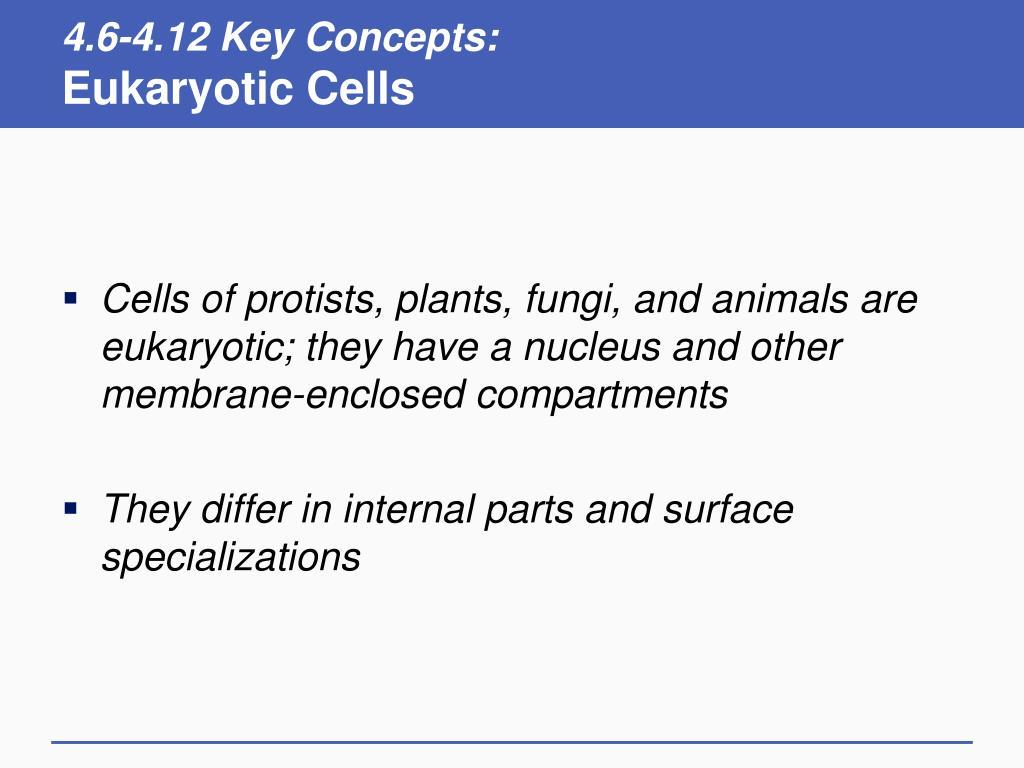 4.6-4.12 Key Concepts: