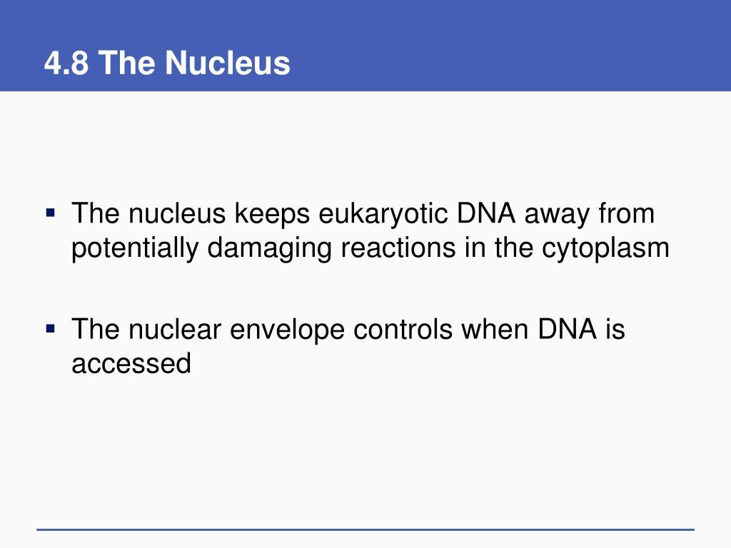 4.8 The Nucleus