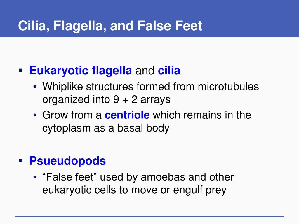 Cilia, Flagella, and False Feet