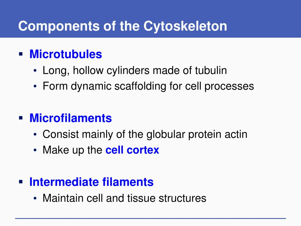 Components of the Cytoskeleton