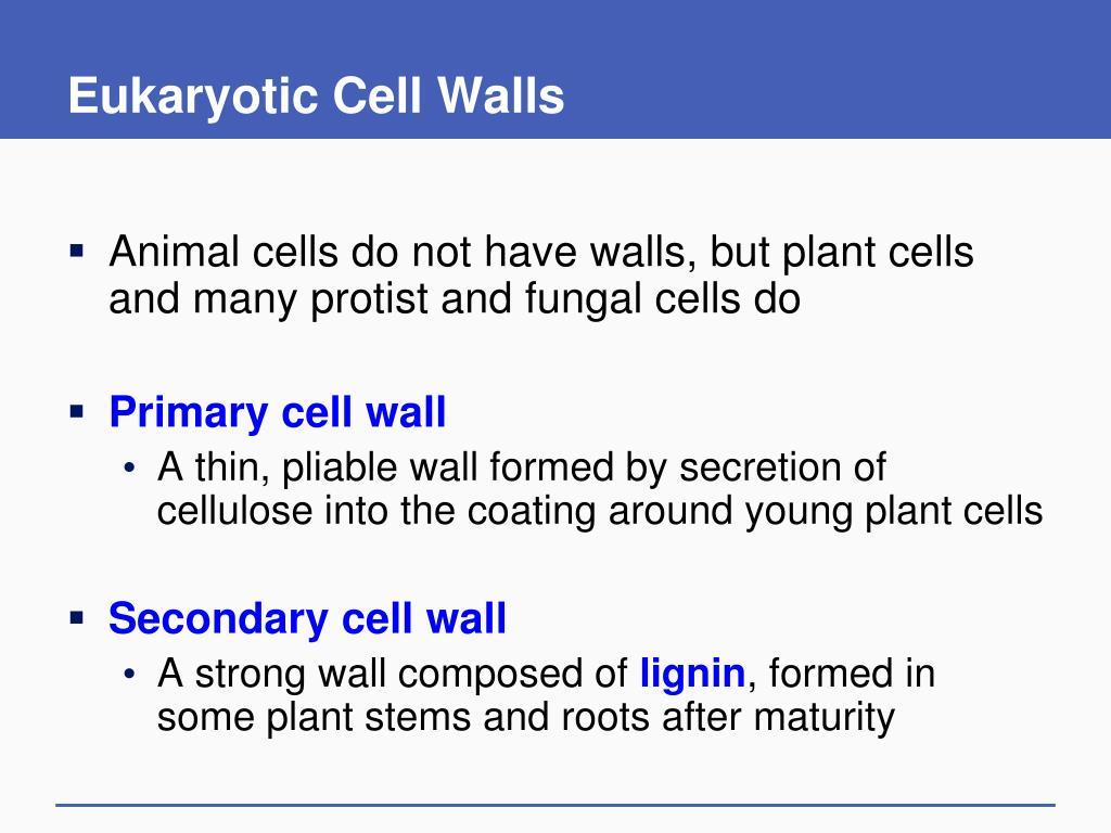 Eukaryotic Cell Walls