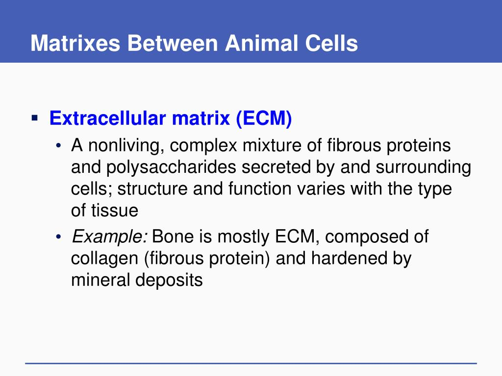 Matrixes Between Animal Cells
