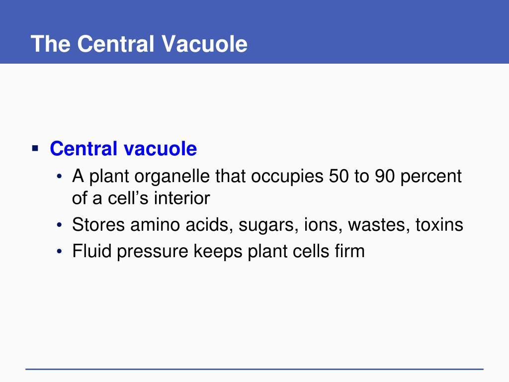 The Central Vacuole